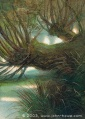 John Howe - Old Man Willow 02.jpg